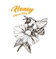 honey sketch bee hand drawn superfood vector image vector image