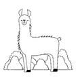 peruvian llama in jungle vector image