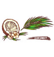 sketch cracked coconut with flowers and leaf vector image vector image