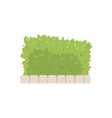 green shrub fence urban infrastructure element vector image