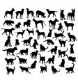 Pet Animal Dog and Cat Silhouettes vector image vector image