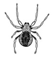 spider with patterns zentangle spider black vector image vector image