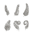Feather set line drawing element vector image vector image