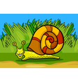 snail mollusk cartoon vector image vector image