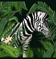 zebra with leaves around vector image vector image