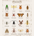 colorful insects icons set vector image