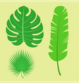 Tropical leaves summer jungle green palm leaf