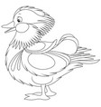 amazing mandarin duck vector image vector image