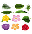 different types of leaves and flowers vector image vector image