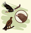 eagles art drawing vector image vector image