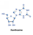 Xanthosine is a nucleoside vector image vector image