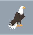 north american bald eagle character symbol of vector image