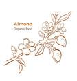 almond botany branch art line sketch
