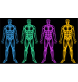 Coloured male bodies vector image vector image
