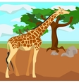 Giraffe on background trees animals and nature vector image vector image