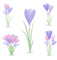 collection of crocuses for your design vector image vector image