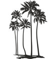 palms trees vector image vector image