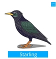 starling learn birds educational game vector image