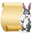cartoon rabbit and scroll paper vector image vector image