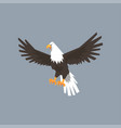 north american bald eagle character feathered vector image vector image