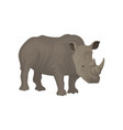 rhinoceros wild african animal