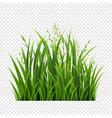 egreengrassborderiagreen grass border in isolated vector image