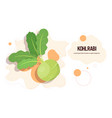 fresh kohlrabi sticker tasty vegetable icon vector image