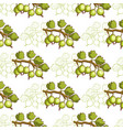 gooseberry seamless pattern vector image