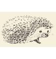 Hedgehog engraving style vintage drawn sketch vector image