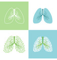 lunges lung and bronchus vector image