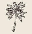 vintage concept palm tree vector image