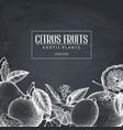 vintage design with citrus plants sketch vector image vector image