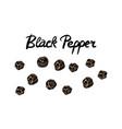 calligraphic lettering black pepper in vintage vector image vector image