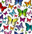 Colorful seamless with butterflies vector image vector image