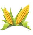 Couple corncob vector image