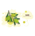 fresh olives branch sticker tasty vegetable icon vector image