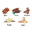 engraved style organic spices and beans vector image
