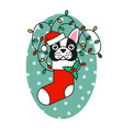 french bulldog in christmas hat in christmas sock vector image