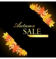 Universal autumn design with seasonal maple leaves vector image