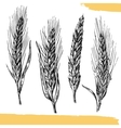Wheat ears Black and white color Bakery sketch vector image vector image