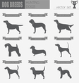 Dog breeds Hunting dog set icon Flat style vector image