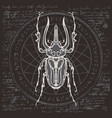 drawing of beetle on an abstract background vector image vector image