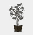 money tree with 100 dollars currency on the plant vector image vector image