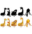 set giraffe and its silhouette vector image vector image