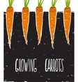 Growing Carrots Freehand Drawing and Lettering vector image vector image