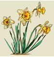 Yellow Daffodil Sketch vector image