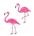 Couple Pink Flamingos Isolated on White Background vector image vector image