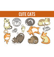 cute cats promotional poster with fluffy breeds vector image vector image