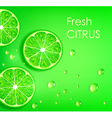lime on a green background vector image vector image
