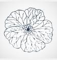 geranium hand drawn vector image vector image